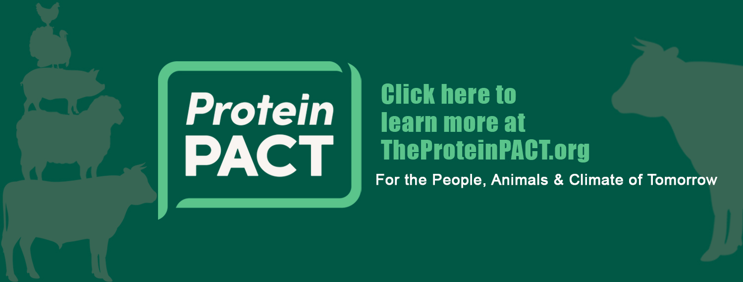 Protein PACT